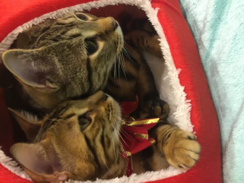 Reina and Rengo cozing up in their strawberry hut.