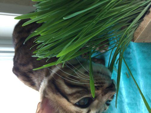 Yum cat grass.