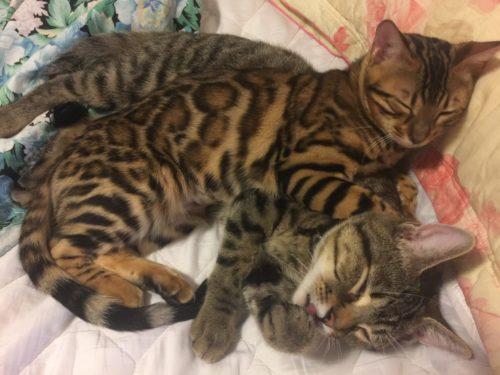 Cat nap time!